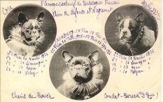 Vintage French Bulldogs ❤