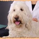 Can Canine Massage Offers Pain Relief To Dogs? ( VIDEO )  The Dog Massage video on next page has already  26,842  views!!  ..  http://www.dogisto.com/canine-massage-offers-pain-relief-dogs/