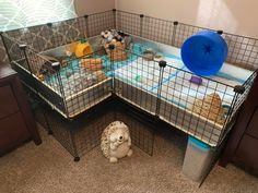 This hedgehog home layout was put together by Brittany Yarzab. It's so cozy I wish I could move in ;-) Thanks for sharing Brittany! Diy Hedgehog House, Hedgehog Pet Cage, Hedgehog Care, Pygmy Hedgehog, Cute Hedgehog, Indoor Guinea Pig Cage, Guinea Pig House, Indoor Rabbit, Pet Guinea Pigs