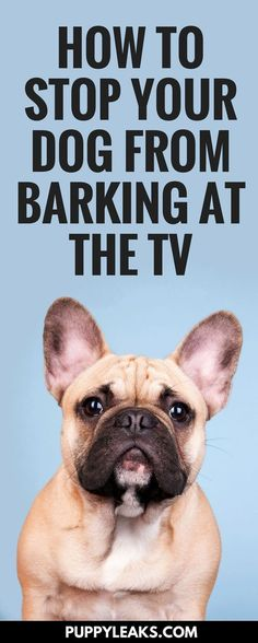 Does your dog freak out at the TV? My dog used to get riled up anytime animals were on TV, and she not only barked at it, she'd get up and nudge it. Here's the method I used to stop my dog from barking at the TV. Training Your Puppy, Dog Training Tips, Brain Training, Stop Dog Barking, Aggressive Dog, Dog Care Tips, Pet Care, Dog Behavior, Dog Life
