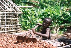Term 2 Topic 3 Stage 2.1 Curriculum Children's rights: Child Labour  Using a case study example of children working in cocoa plantations in western Africa, students will discuss issues around child labour and consider what their moral responsibility is in relation to this and similar issues?