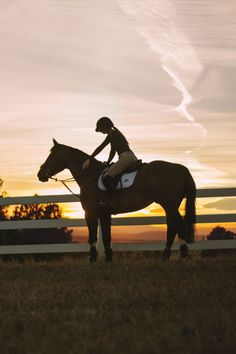 Moments like these are my favorite. Moments like these are my favorite. - Art Of Equitation Cute Horses, Pretty Horses, Horse Love, Beautiful Horses, Animals Beautiful, Cute Animals, Horse Photos, Horse Pictures, Equine Photography
