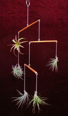 Tillandsias / Air Plants : display hangers and planters 2010 - 2012