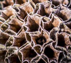 Plant abstract by Angelina Johnson (Still Moments UK)
