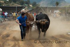 Puedes ver ésta y más fotos en mi fotoblog: http://juanchogarcia.com/2013/05/30/dia-de-canarias-en-la-casa-del-ganadero/