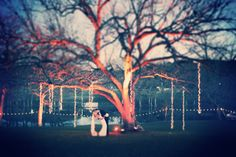 I like the lights hanging from the tree