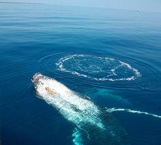 Whale watching at Exmouth, WA  www.thekimberleycollection.com.au