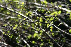 spring forrest