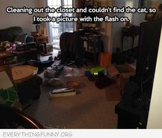 To find your cat...