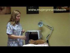 ▶ Gatos con la Dra. Lina Sanz, La elección de la caja de transporte - YouTube