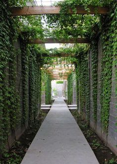 steel and vine pergolas - Google Search