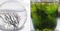 ¿No tienes suficiente espacio para plantas o te gustan tanto que lo pruebas todo?