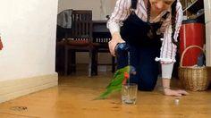 Happy 'lil parrot.