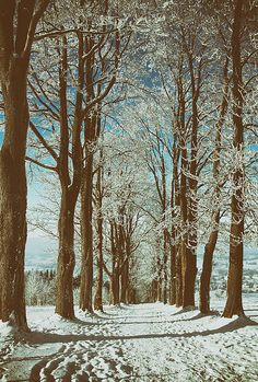 Romantic winter alley Art Print by Jaroslav Frank. All prints are professionally printed, packaged, and shipped within 3 - 4 business days. Thing 1, Winter Garden, Winter Time, All Print, Fine Art America, Earth, Romantic, Prints, Outdoor