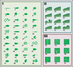 Leaf morphology numbered - Lehti (kasvitiede) – Wikipedia