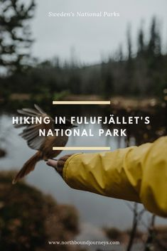 Sweden has a lot of great national parks, Fulufjället it one of them and home to Sweden's largest waterfalls and one of the worlds oldest trees.