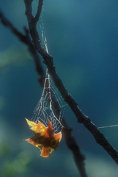 A colorful fall leaf suspended in spider web. Double Exposure Photography, Levitation Photography, Abstract Photography, Experimental Photography, Winter Photography, Nature Photography, Photography Tricks, Beach Photography, Spider Art