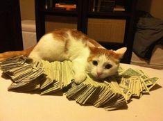 looks like Mrs. Coolridge left her inheritance to the cat.