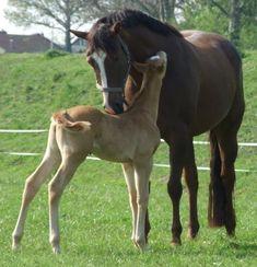 Quarter Horse :-)