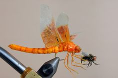 realistic dragonfly with prey