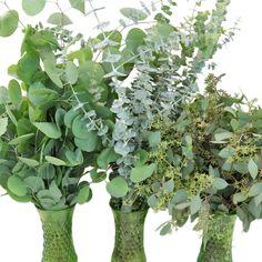 Pre-set Eucalyptus Wedding DIY Greenery Box (FiftyFlowers) (Purchases Medium Pack)
