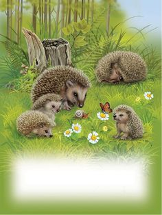 [Visit to Buy] HOMLIF Diy diamond painting cross stitch craft plastic canvas kits diamond paintings hedgehog Hedgehog Art, Cute Hedgehog, Cross Paintings, Easy Paintings, Animals And Pets, Cute Animals, 5d Diamond Painting, Mundo Animal, Drawing Skills