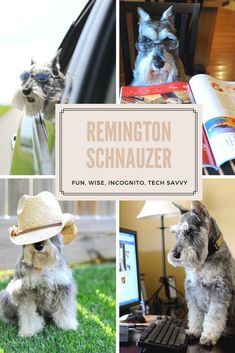 Remington is the mascot for FixYourImages Photography specializing in pets. See all his antics here on his personal board.