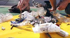 Floating Rubbish Bin That Cleans Oceans + Conheça esse genial projeto dos australianos Andrew Turton e Pete Ceglinski. A dupla está levantando recursos via crowdfunding para a produção em massa e um protótipo já está em testes em Palma de Maiorca, Espanha. Legendas Vagabundos do Mar.  +++ Divulgue essa ideia!