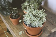 Succulents in a Nashville living room. Click through for more! #westelm