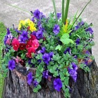 How to Make a Tree Stump Planter: Steps Gardening Flowers Carol's Plan Tree Stump Decor, Tree Stump Planter, Tree Stumps, Easy Flower Painting, Flower Painting Canvas, Garden Yard Ideas, Lawn And Garden, Shade Annuals, Front Porch Flowers