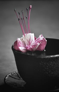 Splash of Color White Picture, Black White Photos, Black N White, Picture Wall, Color Splash, Color Pop, Pink Color, I Believe In Pink, Gris Rose