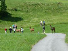 Wanderung mit Behinderten am 15. Juni: Wandern durch frischgrüne Landschaft macht Freude