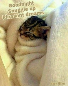 Pin by Chrissymouse. on cuddly kittens-cute cats! Cute Kittens, Ragdoll Kittens, Cute Kitten Pics, Beautiful Cats, Animals Beautiful, Beautiful Images, Cute Baby Animals, Funny Animals, Funniest Animals