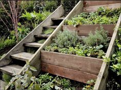 Do you long for a garden but live on a hill or some other awkward piece of land? Stone retaining walls can be lovely, but not always easy or cost effective for many of us to build. Consider a solution like this - built in terracing and staircase in one. I like the fact that the beds are narrow enough to reach from the stairs! What do you think?