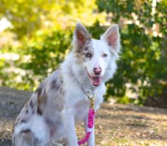 <3 this rope collar * leash set combination!