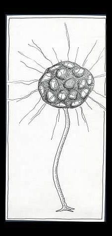 Space Plant - Pen Drawing:  abstract