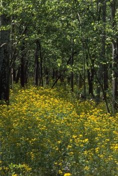 louisiana national parks photos | louisiana state parks parks preservation area st bernard state park