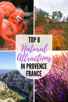 Looking for the best attractions in Provence, France? Provence is a diverse landscape with so much to see and explore. We've compiled a list of the best Provence attractions to save you time! #Provence #France #Nature #Lavenderfields