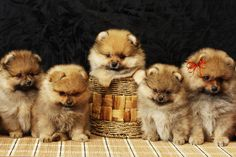 Puppies by Katharina Psychedelia on 500px