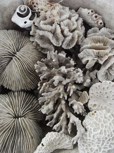 Sea Shells by the Sea Shore | Kara Rosenlund