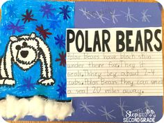 Students draw, learn and write about cuddly polar bears.