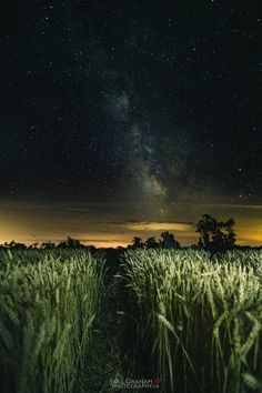 Starry night walks. - Walking through wheat fields in the dead of night with the milky way guiding our path.