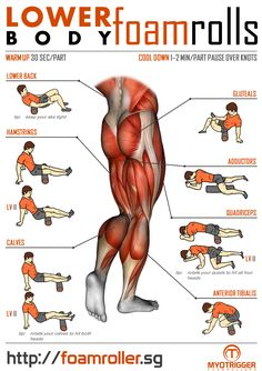 Foam Roller Exercises for Lower Body! Fitness Workouts, Gym Workout Tips, Biceps Workout, Fitness Tips, Health Fitness, Fitness Memes, Workout Men, Workout Plans, Workout Fitness