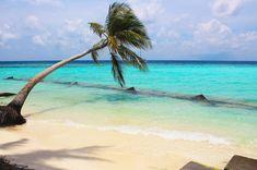 My favourite palm tree on the island of Maafushi, in the Maldives!