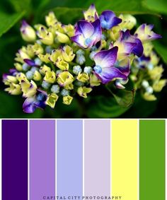 Purple color scheme with yellow or green accent. Would be pretty for a purple wedding! Purple ombre color scheme with accents