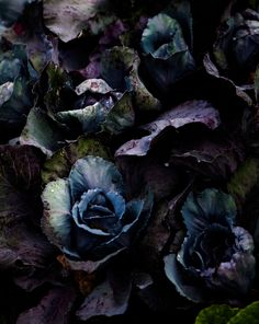 Photography and Styling | Nadine Greeff, Cape Town. Chiaroscuro Food Photography
