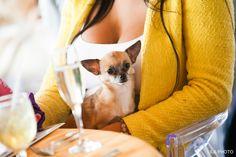 Champagne and chihuahua