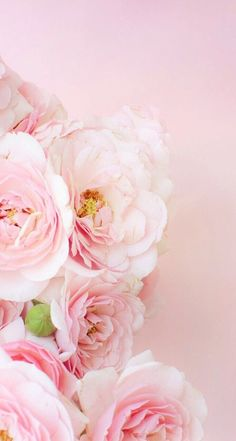 Trendy Flowers Wallpaper Iphone Photography Pink Roses The Effective Pictures We Offer You About orange Flowers Wallpaper A quality picture can tell yo Gold Wallpaper Background, Rose Gold Wallpaper, Flowery Wallpaper, Nature Wallpaper, Wallpaper Backgrounds, Wallpaper Ideas, Trendy Wallpaper, Wallpaper Wedding, Amazing Flowers