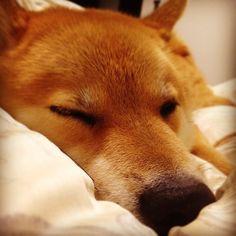 .@Shinjiro Ono | Sweet dream
