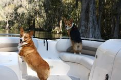 I cannot wait to own my own Corgi brothers when I'm older, Rufus and Reilly! :)